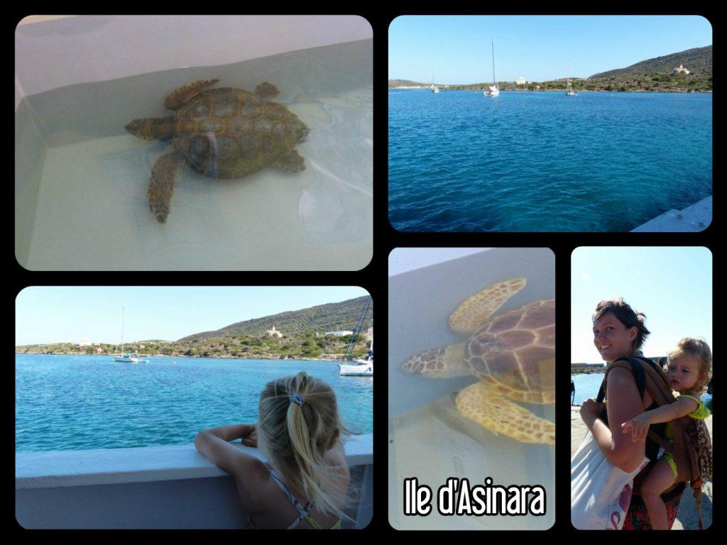 Hôpital des tortues sur l'ile d'Asinara en Sardaigne